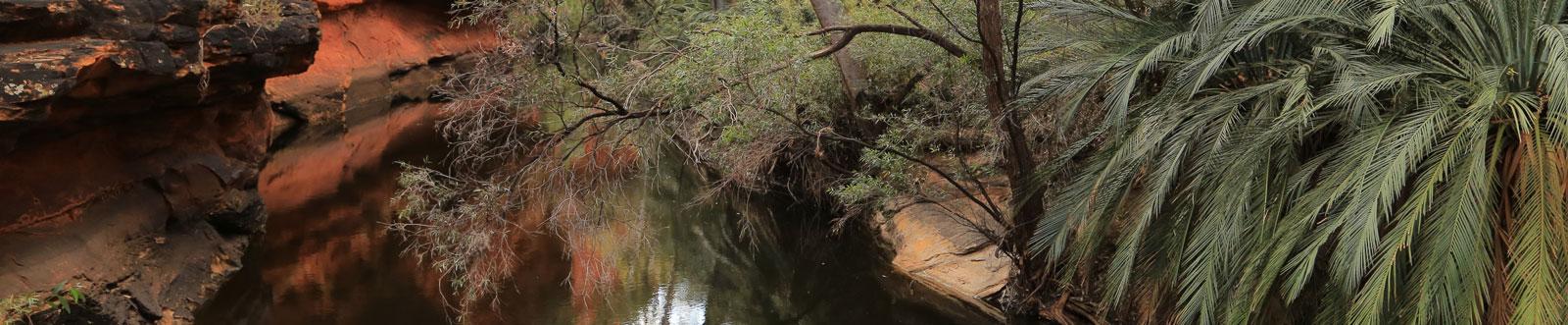 Paradiesisches Lebensgefühl (im Outback)